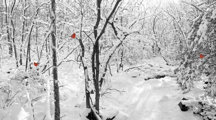 seasonal mindfulness